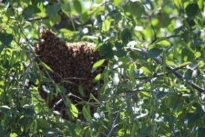 Hive Pics4