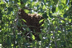 Hive Pics5